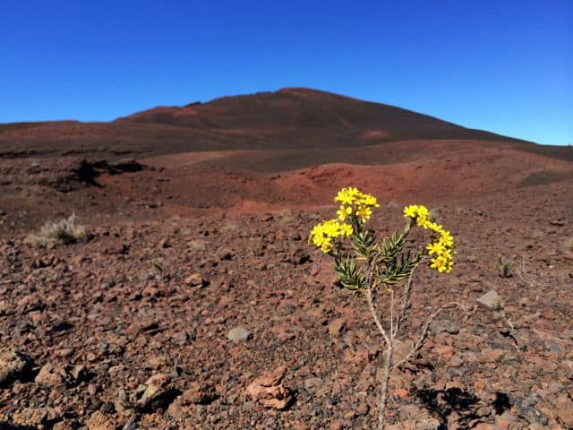 flower-plaine-des-sables-photo