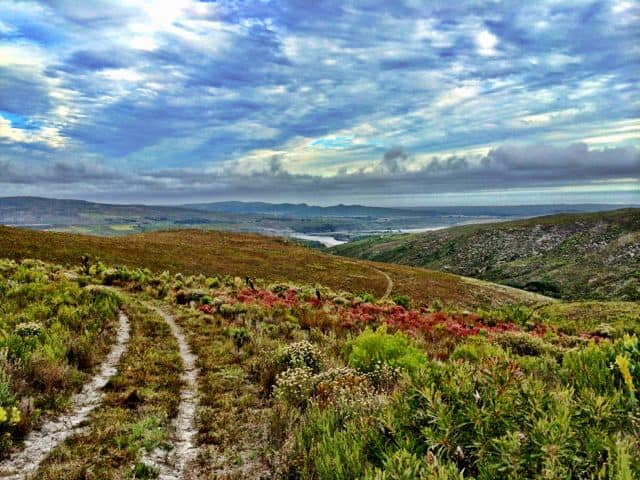 grootbos-nature-reserve-fynbos-photo