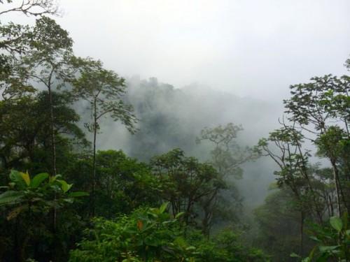 cloud-forest-ecuador-photo