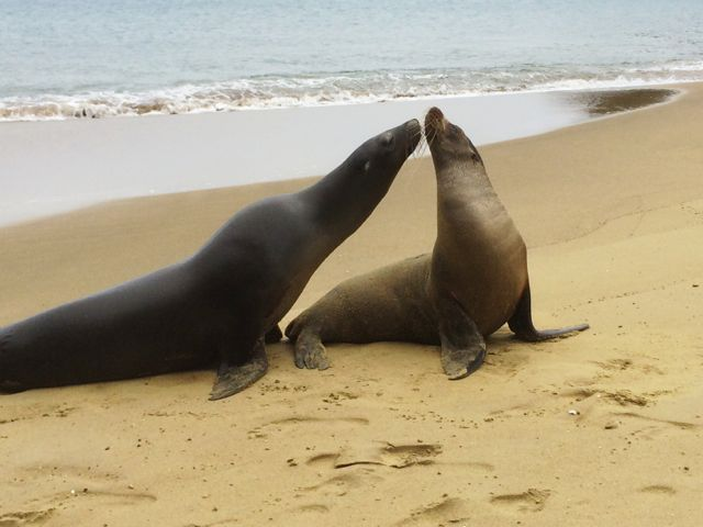 sea-lions-galapagos-photo