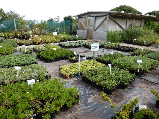 vegetable-gardens-grootbos-green-futures-photo