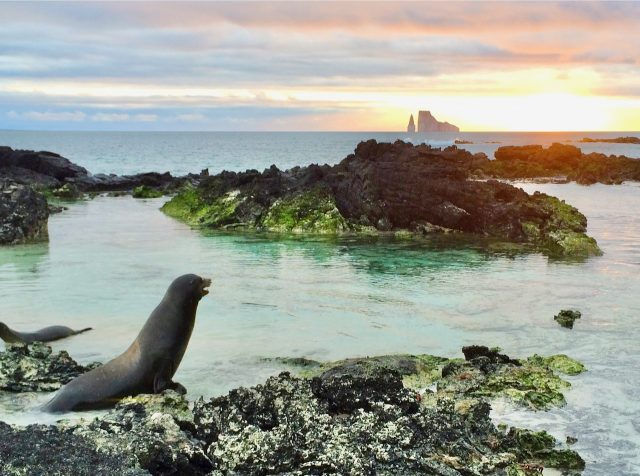 sea-lion-sunset-galapagos-photo