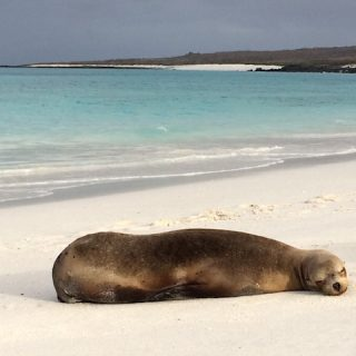 sea-lion-gardner-bay-galapagos-photo