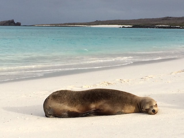 The magic of the Galapagos Islands