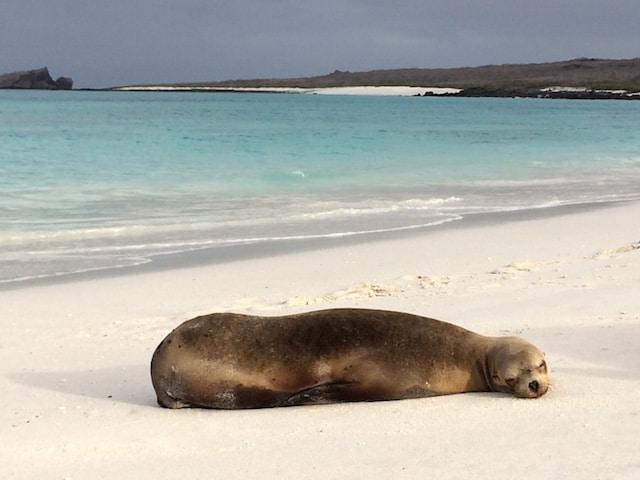 sea-lion-gardner-bay-galapagos-photo
