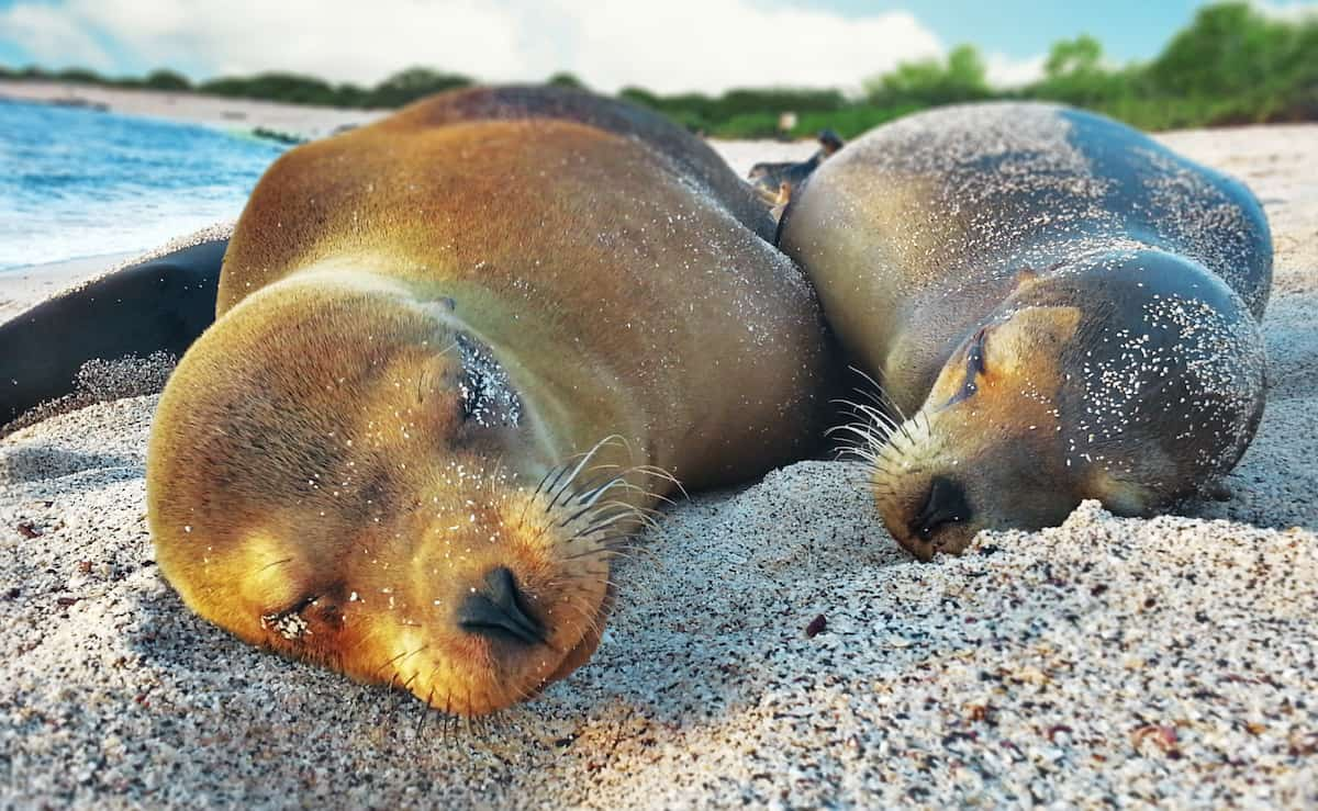 galapagos-cruise-sealions-photo