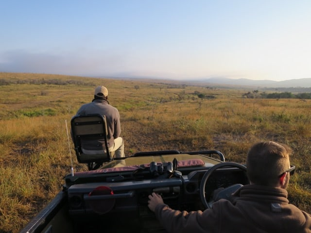 game-drive-phinda-photo