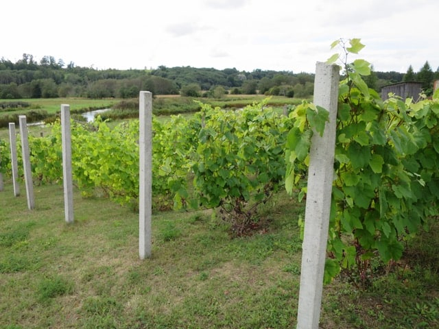 drubazas-vineyard-latvia-photo