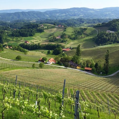 Lovely scenery in South Styria, a wine region you should know about.