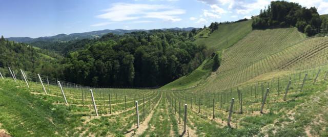 sabathihof-vineyard-photo