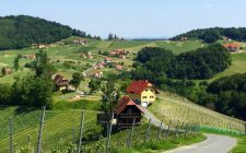 wolfgang-maitz-vineyard-scenery-photo