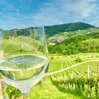 South Styrian wine road photo