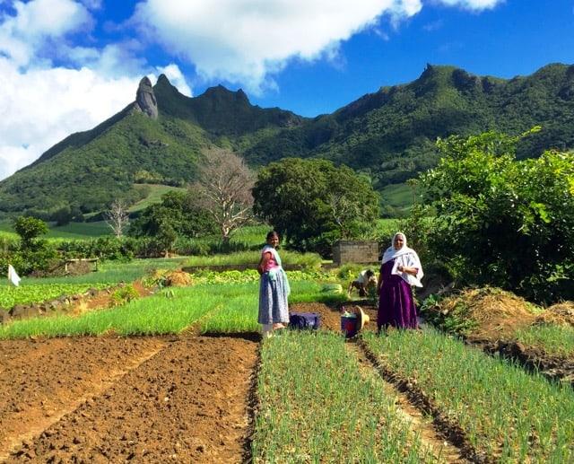 farmers-mauritius-photo