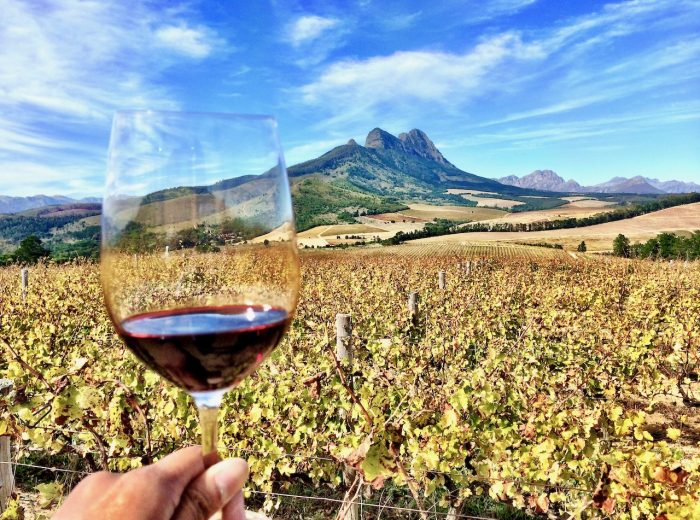 Twelve Stellenbosch wineries to visit