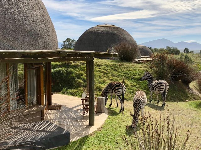 kwena-lodge-gondwana-game-reserve-zebras-photo