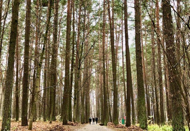 forests-birstonas-lithuania-photo