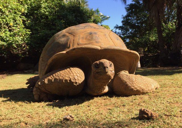 giant-tortoise-mauritius-photo