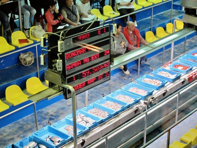Palamos fish auction photo