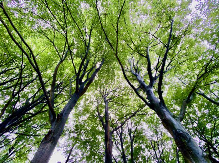 A forest getaway in the Utrechtse Heuvelrug